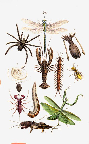 True insects and scorpion