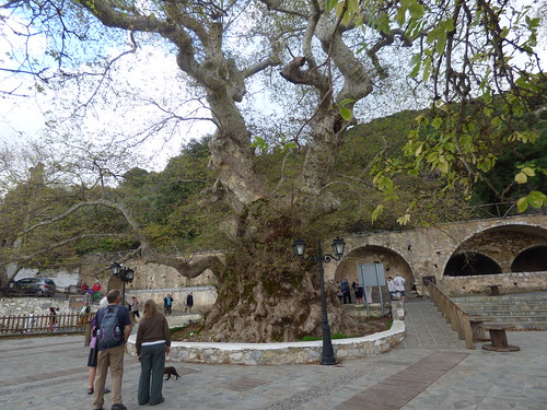 Trip to Krasi village, 2400 year old plane tree