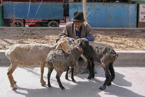 China - Kashgar - Streetlife - Sheeps