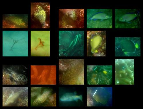 IOP sealife 2012/07/30