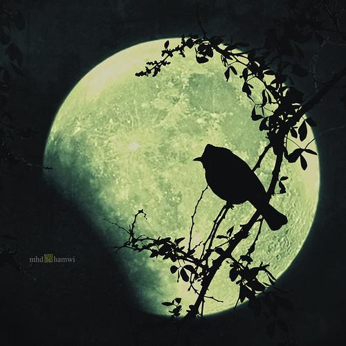 e c l i p s e .. ( Dancer in the Dark .. 2 )
