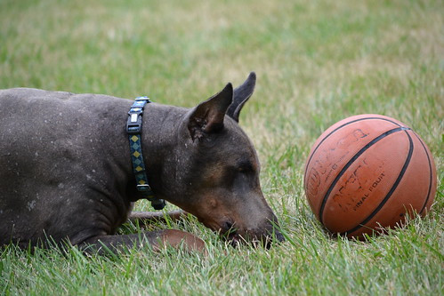 B-Dawg (The basketball and Blue)