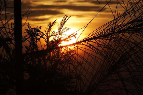 leaves evergreen like cobwebs (Sunrise in Sikunir)