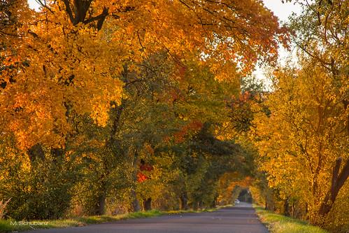 Autumn in Klein Döbbern, Brandenburg, Germany