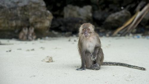 The monkey that bit me!