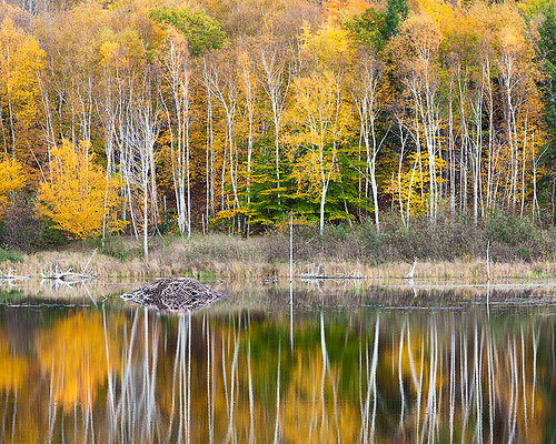 Bear Brook Beaver Dam