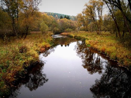 River Warme Bode, Harz Mountains, Germany / Die Warme Bode bei Königshütte