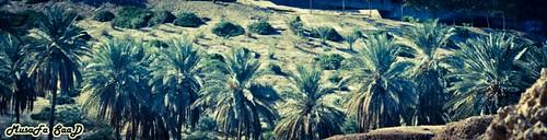 palms Babylon ، نخيل بابل