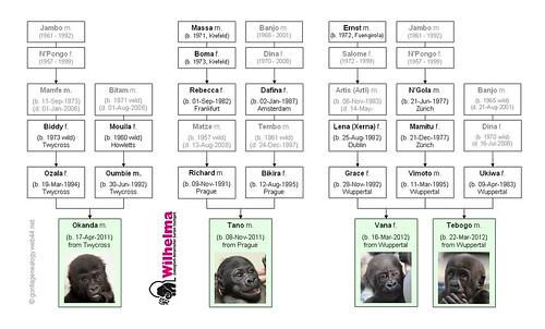 Gorilla Family - Stuttgart Nursery (2014/16)