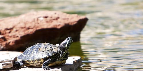 02145-48-Sunshine Turtles-2