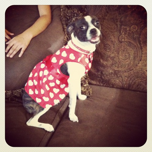 Zoe!!!en lugar de comprar Milca una blusa para ella le compro a la perra!!!