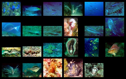 Hatsushima sealife 2012/10/15