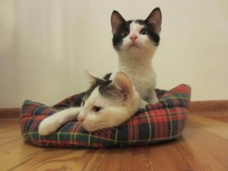 """""""Rainiukas"""": Dovanojami super katinukai Lenonas ir Einšteinas. (video - nepasigailėsit peržiūrėję:))"""