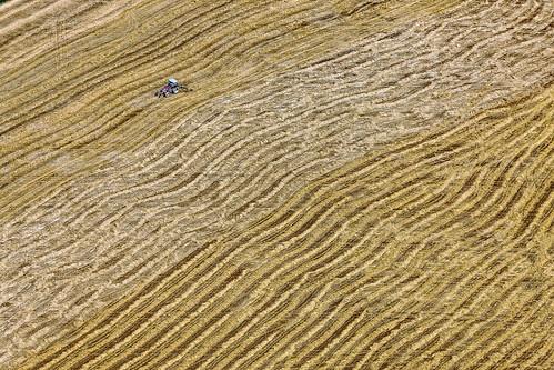 Bumpy Grain Harvest