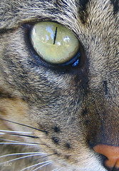 Olho de Gato por Ale  Dagnino